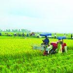 Nông nghiệp Việt Nam đang phải đối mặt với nhiều khó khăn,thách thức.
